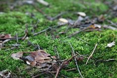 Small branches and leaves - free stock photo