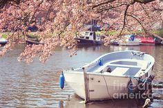 Boat Under Blooming Cherry Tree. Pink Spring In Amsterdam. Spring, the most romantic time, full of energy of the life, love and joy...  I saw a pink spring in Amsterdam and now sharing it with you. #Spring #Bloom #Blossom #Boat #Amsterdam #Canal #Europe #Holland #Pink #SpringTime #JennyRainbowFineArtPhotography #ArtForHome #InteriorDesign #HomeDecor