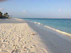 Divi Aruba All Inclusive: Beach