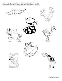 Encercle les animaux qui pondent des oeufs - Activité à imprimer