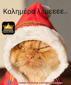 Funny Cats, Funny Animals, Cute Animals, Animal Memes, Animals Images, Christmas Animals, Christmas Cats, Merry Christmas, Christmas Mood