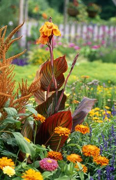 Tropicanna Cannas Zinnias And Amaranth In Landscape Houston Garden Easy Summer