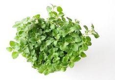 Parsley, Herbs, Plants, Food, Essen, Herb, Meals, Plant, Yemek