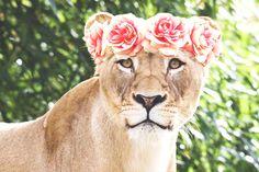 Female Lion Pink Flower Crown by KittensOfDestiny on DeviantArt