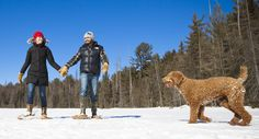 The coldest season brings sweethearts closer together against the backdrop of a winter wonderland in the Explorers' Edge region of Ontario. Look familiar? Dog Friendly Hotels, Algonquin Park, Wellness Spa, Dog Friends, Winter Wonderland, Best Dogs, Ontario, Romance, Adventure