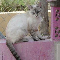 PIN - Gato adoptado - AsoKa el grande