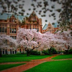 University of Washington - Seattle, Washington   AFAR.com