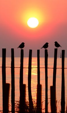 Sparrows on the Fence greeting the morning sun | Amazing Pictures -Images, Photography from Travels All Aronud the World