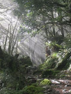 NZ Multi-day hikes