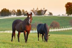 Take a ride down the one-lane roads that crisscross sprawling Calumet Farm, the most famous name in Kentucky Thoroughbred racing.