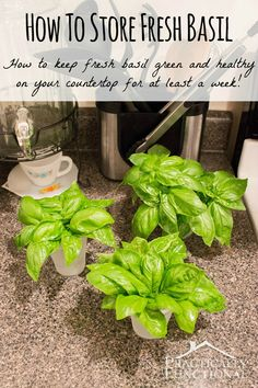 How To Store Fresh Basil: Learn how to keep fresh basil green and healthy on your countertop for at least a week! Storing Fresh Basil, Fresh Herbs, Container Gardening, Gardening Tips, Vegetable Gardening, Organic Gardening, Pruning Basil, Basil Recipes, Vegetable Recipes