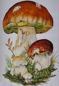 Risultati immagini per peinture porcelaine Botanical Illustration, Botanical Prints, Watercolor Illustration, Watercolor Paintings, Porcelain Jewelry, Porcelain Vase, Fine Porcelain, Mushroom Paint, Simple Artwork