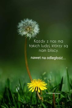 Dandelion, Funny, Flowers, Plants, Good Morning, Quotes, Dandelions, Funny Parenting, Plant