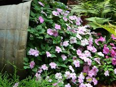 impatiens spilling out of overturned bucket; pet safe, likes shade & moisture, backyard only - deer love them