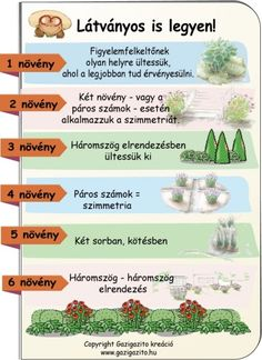 Petra, Gardening Tips, Home And Garden, Hacks, Plants, Flora, Cute Ideas, Plant, Planting