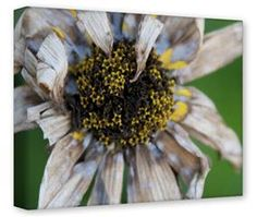 Gallery Wrapped 11x14x1.5  Canvas Art - Dead