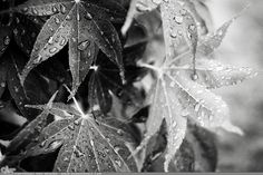 """Picture-A-Day (PAD n.2164) """"Last Drops"""" ~Amy, DangRabbit Photography"""