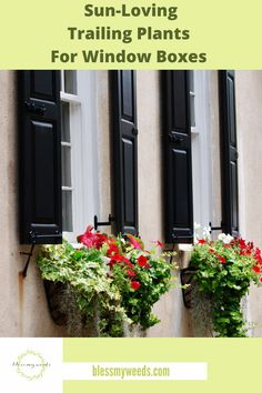 Window Box Plants, Window Boxes, Plant Guide, Heuchera, Organic Gardening Tips, Plant Nursery, My Secret Garden, Outdoor Plants, Growing Plants