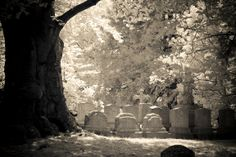 Forest Hill Cemetery, Boston Mass. by Paula Cravens