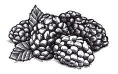 Berries.  #illustration #sharpies