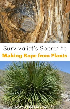 The Survivalist's Secret to Making Rope from Plants. One of the most important pieces of survival gear to have is rope, and it is definitely something you should have in your Bug Out Bag for wilderness survival. But what if you lose your rope or run out? That is where knowing how to make rope from plants comes in.