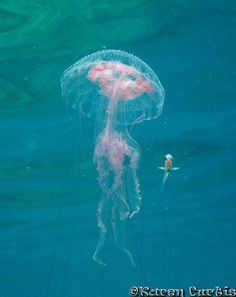 Luminescent Jellyfish & Friend