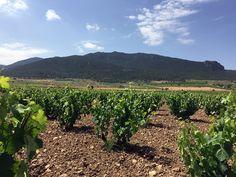 The Vineyards | Consejo Regulador DOP Vinos de Jumilla