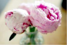 Pink peonies, my favorite <3
