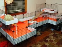 Make sure that your lovely guinea pigs have the best things in life. A sizeable guinea pig cage, or run, not only tends to make them more enjoyable to view, but guarantees they get the physical activity that they require to stay healthy. Diy Guinea Pig Cage, Guinea Pig Hutch, Guinea Pig House, Pet Guinea Pigs, Guinea Pig Care, Chinchillas, Hamsters, Rodents, Bunny Cages