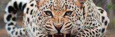 Como escapar de animais selvagens no mato? – Sobreviva Ep.04 | Sobrevivencialismo