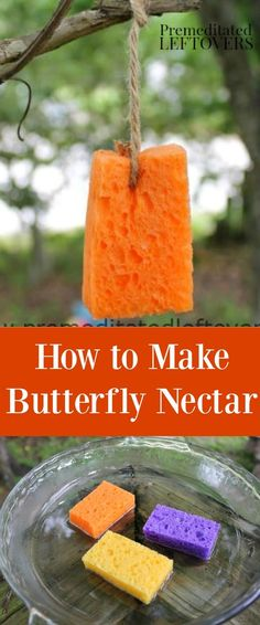 Do you want to attract butterflies to an area of your yard? Here is How to Make . Do you want to attract butterflies to an area of your yard? Here is How to Make Butterfly Nectar - Make this quick and simple butterfly nectar recipe . Butterfly Food, How To Make Butterfly, Butterfly Feeder, Simple Butterfly, Butterfly House, Butterfly Garden Plants, Butterfly Project, Fruit Garden, Butterfly Flowers