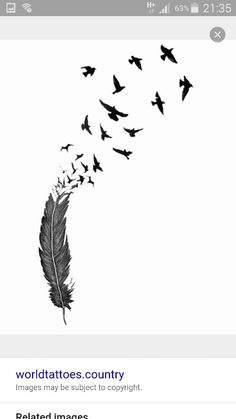 Feathers and birds