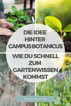 Suchst du Garten Tipps und Garten Ideen? Ich empfehle dir die Garten Vorträge des Campus botanicus. Auf dieser Plattform findest du Online Vorträge, Webinare, Seminare und Kurse für deine Gartengestaltung. Die Themen sind breit gefächert und umfassen Biodiversität, Naturgarten, Beetplanung, Gehölzpflege, Selbstversorgergarten und vieles mehr. Der Austausch über gärtnerische Themen ist ebenfalls vorhanden. Hier stelle ich dir Campus Botanicus vor. #petra.pelz Flora Und Fauna, Cluster, Happy Birthday, Plants, Design, Private Garden, Little Gardens, Natural Garden, Modern Gardens