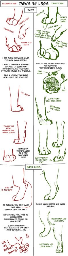 Big Cat Paw and Leg Tutorial by TamberElla.deviantart.com on @deviantART