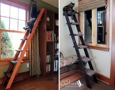 Cat Ladder Feline Furniture makes these attractive and functional ladders just for cats. For cats making their own fun, see https://www.pinterest.com/yrauntruth/felinity-hobbies-accomplishments-games-crime-scene/