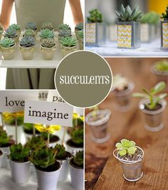 Green Wedding Favours - Grow Your Own