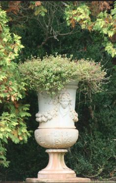 urn as topiary Container Plants, Container Gardening, Beautiful Gardens, Beautiful Flowers, Grands Vases, Pot Jardin, Urn Planters, Garden Urns, Terracotta
