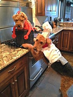 Pet Halloween is the most important pet holiday of the year. Here are some of its greatest heroes. Funny Dogs, Cute Dogs, Funny Animals, Cute Animals, Animal Costumes, Pet Costumes, Halloween Costumes, Airedale Terrier, Terriers