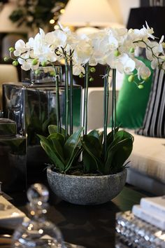 ACCESSORIES, FLOWERS, FOLIAGE & TOPIARY POTTED PHALAENOPSIS