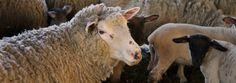 Por que debemos respeitar os animais? Os seres humanos são capazes de experimentar sofrimento e desfrute. É por isso que podemos ser prejudicados ou benefi