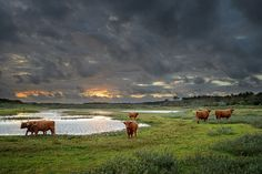 Sunset-With-Rain-Clouds-and-Cattle.jpg (1800×1200)