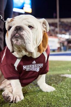 Hail State! Check this out too ~ RollTideWarEagle.com sports stories that inform and entertain. Plus Train Deck FREE online football tutorial to learn the rules of the game you love, #Collegefootball #HailState #MississippiState