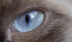 Cats Have Super, Psychedelic Vision