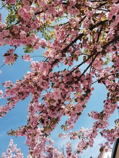 pin:@joy-anna //  Spring Blossom