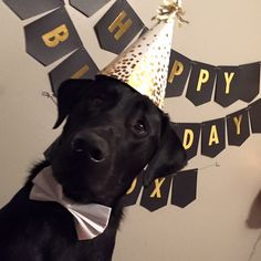Mind Blowing Facts About Labrador Retrievers And Ideas. Amazing Facts About Labrador Retrievers And Ideas. Dog First Birthday, Happy Birthday Black, Puppy Birthday, Happy Birthday Labrador, Birthday Nails, Carlin, Puppy Party, Black Labrador, Black Labs
