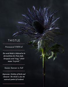 Flower Glossary: Design Sponge
