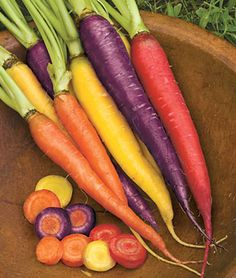"carrot Kaleidoscope Mix  Unique Colorful Mix  Mix includes 20% each of Atomic Red, Bambino, Cosmic Purple, Solar Yellow & Lunar White. Sow in deep, well-worked, stone-free soil after danger of heavy frost. Sow seeds thinly in rows 12"" apart. Cover with fine soil, firm lightly and keep evenly moist. Do not transplant, as crooked roots may result."