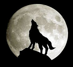 The Full Wolf Moon is a stark reminder that winter is here to stay for a while. In some parts of the world will be able to see the penumbral eclipse Wolf Images, Wolf Photos, Wolf Pictures, Wolf Wallpaper, Dark Wallpaper, Animal Wallpaper, Husky, Amoled Wallpapers, Iphone Wallpapers
