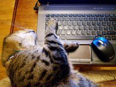 Hit esc key by turgidson, via Flickr