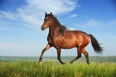 running horse home garden print Horse Photos, Horse Pictures, Zodiac Signs Animals, Horseback Riding Lessons, Horse Names, Running Horses, Thoroughbred Horse, Horse Art, Wild Horses